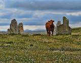 Stornoway,  Harris, Hebrides, Scotland - 2012