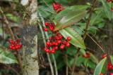 Wild Berries on Wild Orange Grove Trail