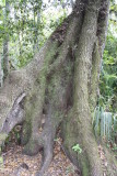 Alexander Blair Big Oak Trail