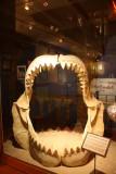Giant Prehistoric Shark Jaw