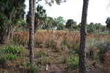 Myakka Islands Preserve