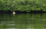 Mangrove Sanctuary, Baganga