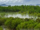 Guang guang Mangrove Nursery