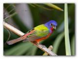 Oiseaux_Floride_2011