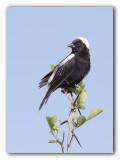 oiseaux_2011