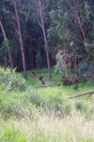 Forest Around Parque de Sal.jpg