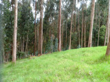 Forest in South Zipaquira.jpg