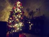 Christmas Tree at Alexander's House.jpg