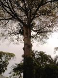 Tree Near Estacion del Tren - Jardin Botanico.jpg