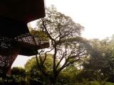 Trees in El Orquideorama - Jardin Botanicao de Medellin.jpg