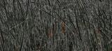 Black Reeds