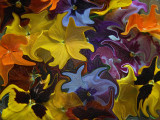 Floating Flowers in Aspic - Colour