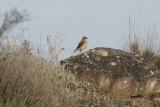 Lleida 6-4-2012 Tapuit 3.jpg