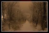 Winter Night Scene 2