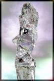 Ice Sculpture 1 - 8102.jpg