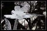 Ice Sculpture 2 - 8095.jpg