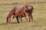 15 Mare and Foal