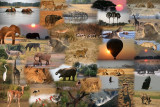 African Safari Collage