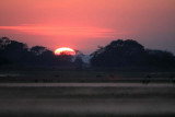 Lechwe Antelope at Dawn on the Busanga Plains