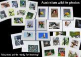 Bird and Wildlife Art