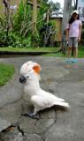 Bali Day2 (22)_resize.JPG