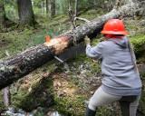 Pam sawing
