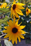 alta_garden1.jpg