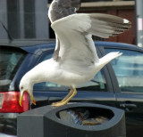 gull plunder trash