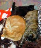Koc'ka, Ninja and Padme in deep sleep