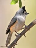 West Texas and Arizona Birds 2012