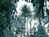 Trees Near the Fox Track Datapoint 1