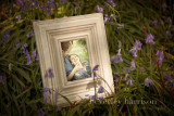 Sally and Carls pre wedding shoot amongst the bluebells...