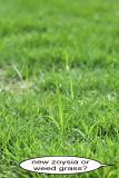 grass maybe 1 IMG_3835.jpg