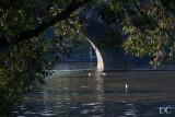 ducks on Vltava River