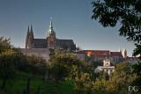 views from Seminarska Garden