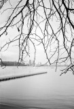 winter branch with city blur