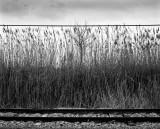 Lines, 2010.jpg