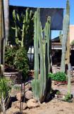 April 1--Cactus Garden near by