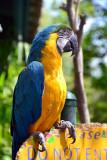 April 4,   Parrot at Julieann's