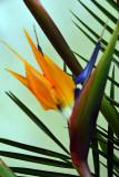 April 6, 2012   bird-of-paradise.