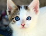 April 10,   Kitten next door named Scout