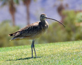 April 15- Curlew