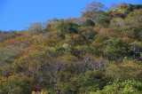 tropical dry forest canopy