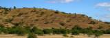 savanna landscape