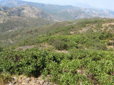 vegetation from Mt Ramelau summit with Eucalyptus orophila