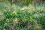 Atauro beach vegetation