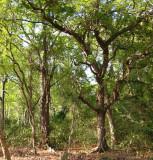 forest Tutuala Beach