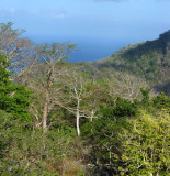 semi-deciduous forest Tutuala