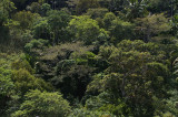 Atauro montane forest canopy