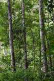 upland rainforest